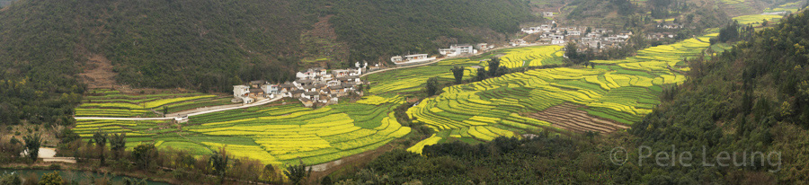 C10-Jiulong Waterfalls Canola Field Luoping 0044-52.jpg